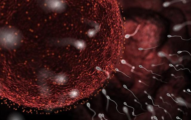 kak-iskusstvennie-smazki-vliyayut-na-spermatozoidi
